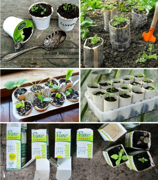 creative-seed-starting-container